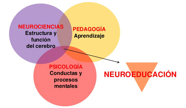 neuro_educacion1